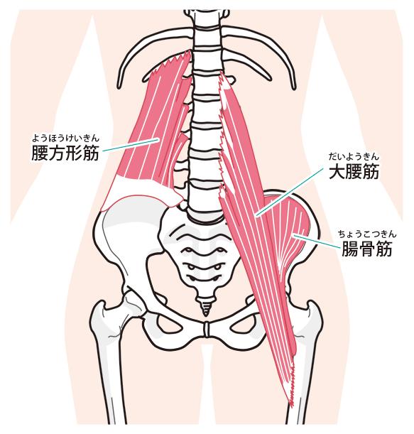 ヘルニア 腸腰筋 腰痛改善